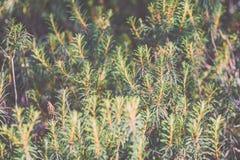 frische Blätter des vibrierenden grünen Frühlinges von Weinlese f des Baums im Frühjahr - Lizenzfreie Stockbilder