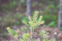frische Blätter des vibrierenden grünen Frühlinges von Weinlese f des Baums im Frühjahr - Stockbild