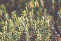 frische Blätter des vibrierenden grünen Frühlinges von Weinlese f des Baums im Frühjahr - Lizenzfreies Stockfoto