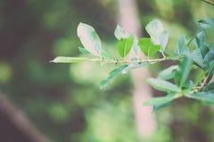 frische Blätter des vibrierenden grünen Frühlinges von Weinlese f des Baums im Frühjahr - Stockbilder