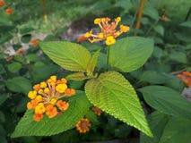Frische Blätter und Blumen Stockfotografie