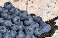 Frische Blaubeeren Geschmackvoll, Nachtisch stockfoto