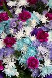 Frische Blumen Stockbild