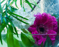 Frische, Blumen des Frühlinges lizenzfreies stockbild