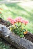 Frische Blumen des Sommers oder des Frühlinges im Freien lizenzfreies stockfoto