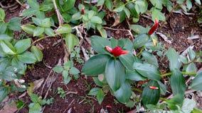 Frische Blumen, die im Garten während des Frühlinges blühen lizenzfreie stockfotos