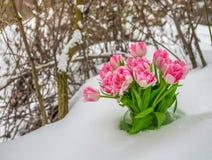 snowdrop blumen auf schnee stock photos download 642 images. Black Bedroom Furniture Sets. Home Design Ideas