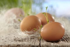 Frische braune Eier lizenzfreies stockbild