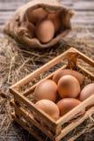 Frische braune Eier stockbilder