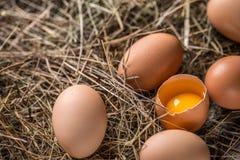 Frische braune Eier lizenzfreie stockbilder