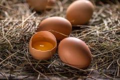 Frische braune Eier lizenzfreie stockfotos
