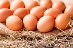 Frische braune Eier Stockfotos