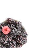 Frische Brombeere und rote Himbeere trägt in einer kleinen weißen Schüssel Früchte Stockfotografie