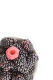 Frische Brombeere und rote Himbeere trägt in einer kleinen weißen Schüssel Früchte Stockbild