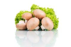 Frische Champignons mit dem grünen Blattkopfsalat lokalisiert auf Weiß Lizenzfreie Stockfotografie