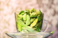 Frische des grünen Tees Stockfotos