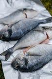 Frische dorado Fische Lizenzfreies Stockfoto