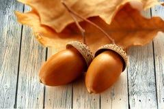 Frische Eicheln mit getrockneten Blättern lizenzfreies stockbild