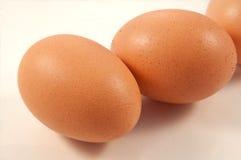 Frische Eier stockfoto
