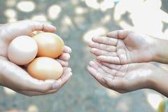 Frische Eier lizenzfreie stockbilder