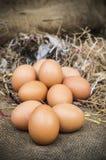 Frische Eier Lizenzfreies Stockbild