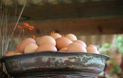 Frische Eier Stockfotografie