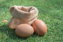 Frische Eier auf einem grünen Gras Stockfoto