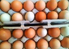 Frische Eier aus Freilandhaltung des Bauernhofes stockfotografie