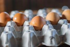 Frische Eier im Eikasten Stockfotos