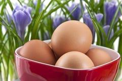 Frische Eier im roten Cup mit Krokussen Lizenzfreies Stockbild