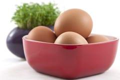 Frische Eier mit frischer Kresse auf Weiß Stockfoto