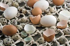 Frische Enten-, Hennen- und Wachteleier Lizenzfreie Stockfotos