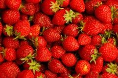 Frische Erdbeere stockbild