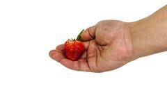 Frische Erdbeere in der Hand auf dem weißen Hintergrund stockfotos
