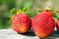 Frische Erdbeere der Nahaufnahme Stockbilder