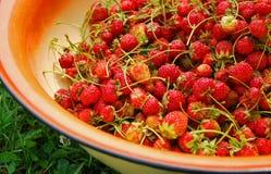 Frische Erdbeere in einem Bassin Lizenzfreie Stockbilder