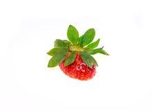 Frische Erdbeere getrennt Stockfotos