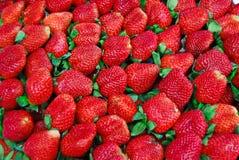 Frische Erdbeere im Markt Stockfoto