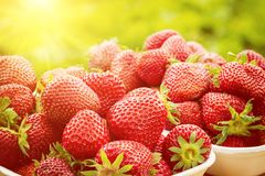 Frische Erdbeere, reife rote Früchte in der Natur, gesunder Lebensmittelhintergrund belichtet durch Sonnenlicht Lizenzfreie Stockfotografie
