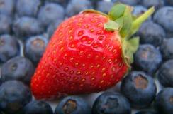 Frische Erdbeere und blaue Beeren Stockfotos