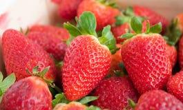 Frische Erdbeeren. lizenzfreie stockfotos