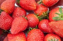 Frische Erdbeeren. lizenzfreies stockfoto