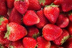 Frische Erdbeeren Stockfotografie