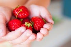 Frische Erdbeeren in den Händen eines Kindes Lizenzfreies Stockfoto