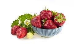 Frische Erdbeeren in der Schüssel Lizenzfreies Stockfoto