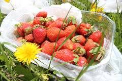 Frische Erdbeeren im Plastikkasten Stockfoto