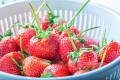 Frische Erdbeeren im Plastiksieb Stockfoto
