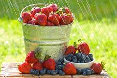 Frische Erdbeeren im Regen Stockbild