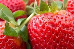 Frische Erdbeeren schließen oben Stockfotos