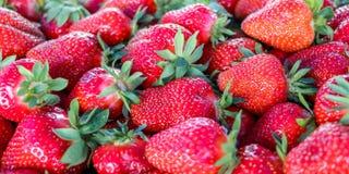 Frische Erdbeeren, Serbien lizenzfreie stockfotos